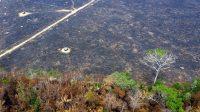 Presiden Brazil akhirnya terima bantuan dana untuk atasi kebakaran hutan Amazon (net)