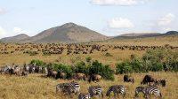 6 tempat terindah di Afrika yang wajib dikunjungi saat ke 'Benua Hitam' (net)