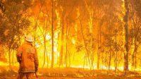 Kian Parah, Sebanyak 6 Orang Dilaporkan Tewas Akibat Kebakaran Hutan Australia 1