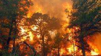 Asap hitam kebakaran hutan Australia warnai langit Selandia Baru (net)