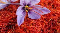 Berikut, rahasia dibalik harga saffron yang selangit (net)