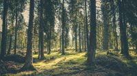 spot wisata hutan pinus di Jawa Timur (net)